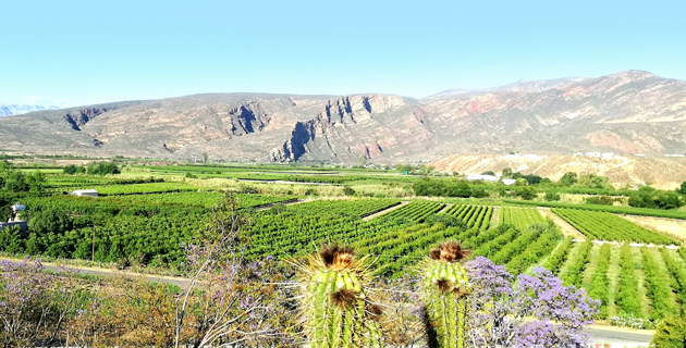 calitzdorp, wine cellar, wine sales, tasting room, klein karoo, activities in calitzdorp